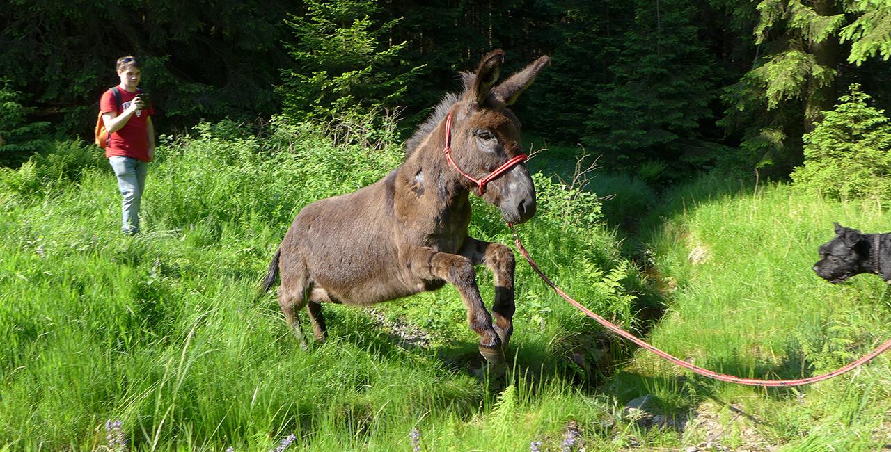 Esel Outdoor Tag in Heinade