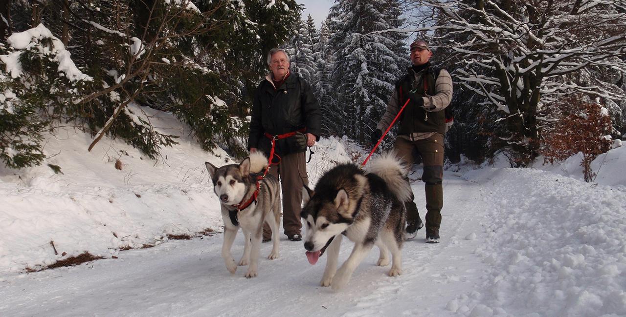 Husky Tageswanderung Clausthal-Zellerfeld