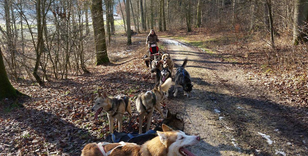 Schlittenhunde-Kurs in Mödingen